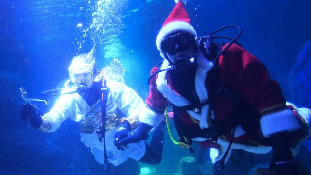 Este Pai Natal foi alimentar peixes, tubarões e raias em Berlim. Ora veja