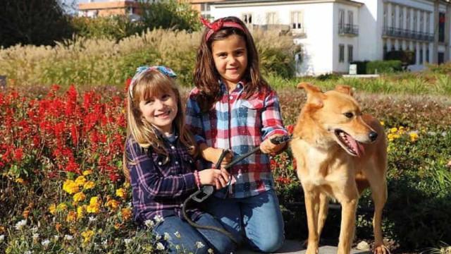 Cães à procura de dono posam para calendário solidário em Vila Verde