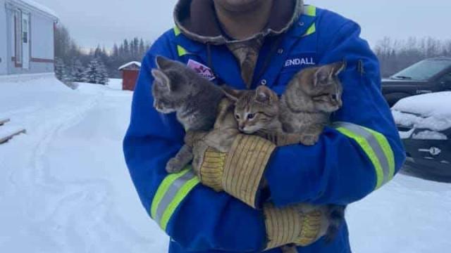 Homem usa café quente para resgatar gatinhos quase congelados no Canadá