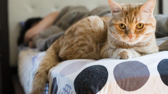 Se morrer muito provavelmente o seu gato vai comê-lo. Estudo alerta