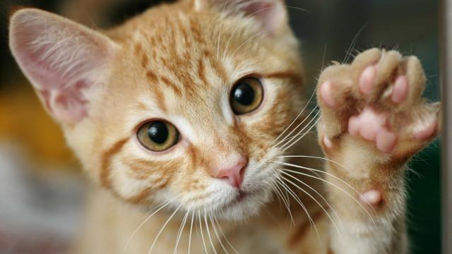 Os gatos sentem saudades dos donos?