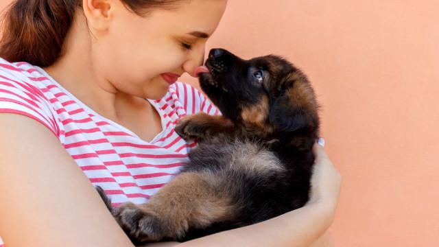 Entenda o risco de deixar o seu cão dar-lhe um 'beijo'