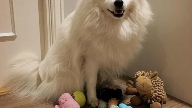 """Comprou um """"cão"""" que não ladrava e pouco depois soube que foi enganada"""
