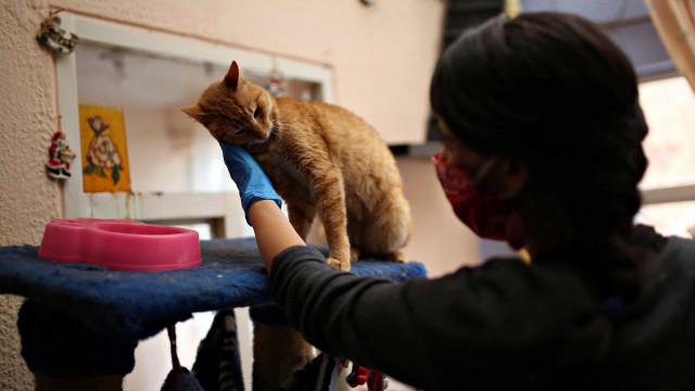 Covid-19 chega aos animais e já infetou dois cães, um gato e um tigre