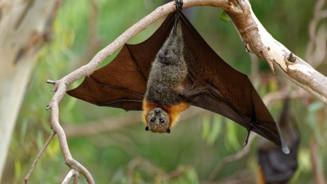 Vírus de morcego em laboratório chinês não é da Covid-19, diz cientista
