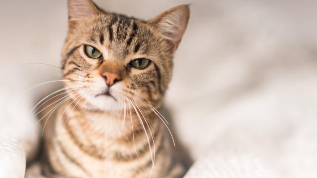 Quatro coisas que os gatos odeiam nos seres humanos