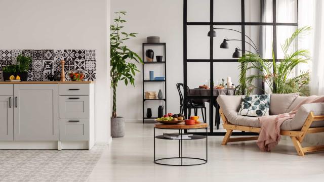 Confira cinco razões para usar plantas na decoração de interiores