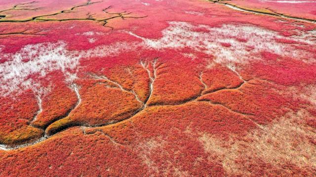 As imagens aéreas de uma das atrações da China, a 'Praia Vermelha'