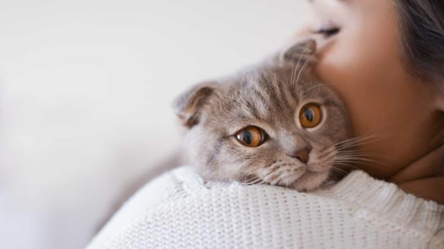 Nove benefícios de fazer festas a gatos, segundo a ciência