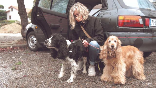 Despejada, mulher de 52 anos vive num carro com os cães em Aveiro