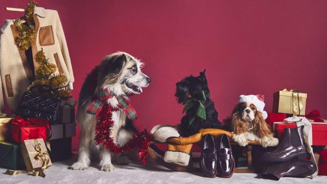 'A Pawfect Holliday'. Cães são os protagonistas da nova campanha da Tod's