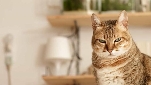 Porque é que o seu gato olha fixamente para si? Cinco razões