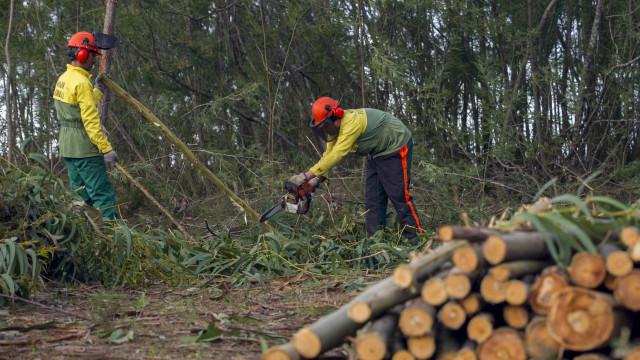 Ministro diz que estão limpos 70% dos 31 mil terrenos sinalizados