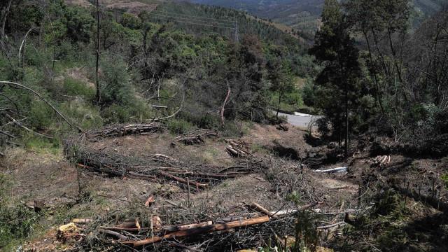 Pedrógão Grande: Maioria da floresta continua ao abandono