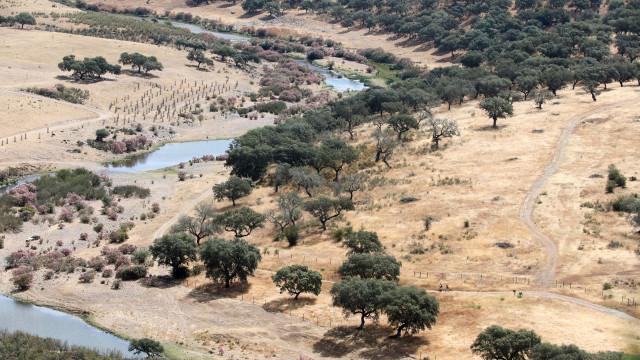 O montado ibérico desafia as alterações climáticas