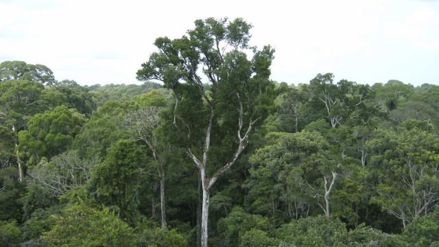 Luxemburgo vai doar 100 mil euros para proteger floresta amazónica