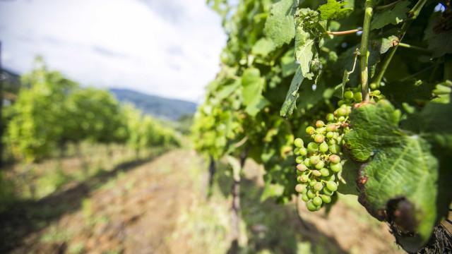 'A vinha e o vinho' em destaque na Feira Nacional da Agricultura