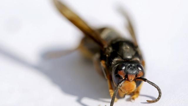 Idoso morre picado por inseto. É a segunda morte do género em Portugal