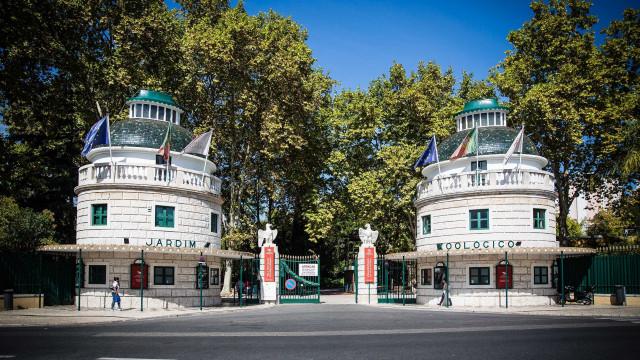 Lisboa na Rua leva cinema ao Jardim Zoológico na celebração dos 135 anos