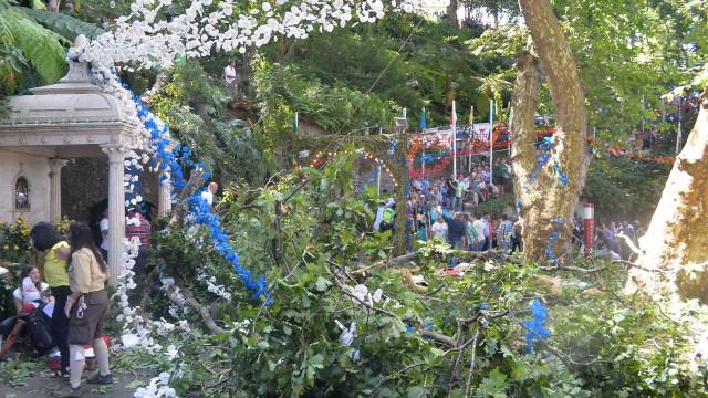 Queda de árvore Madeira