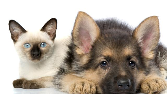 Sociedade Protectora dos Animais