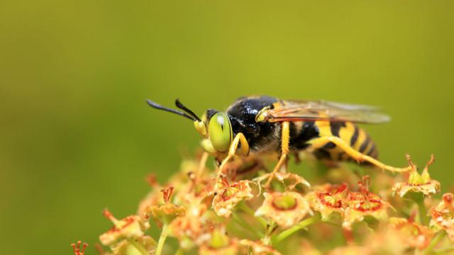 Parque da Pena em Sintra reabre quarta-feira após eliminação das vespas