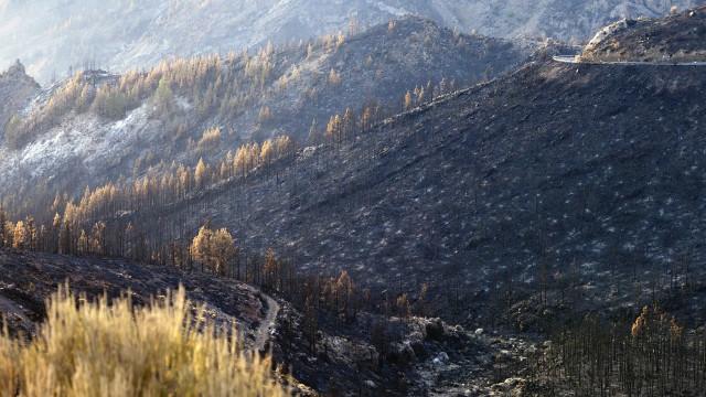 Desafio para reforma florestal avança em clima de tragédia dos incêndios
