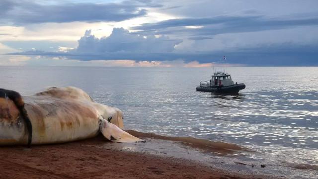 Noruega já mata mais baleias do que o Japão e a Islândia juntos