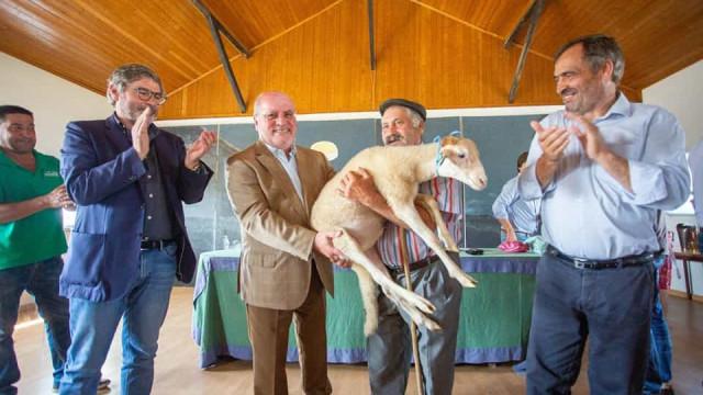 Governo entregou 500 ovelhas a pastores que perderam animais nos incêndio