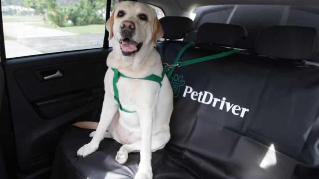 PetDriver, a aplicação de transporte para animais de animação