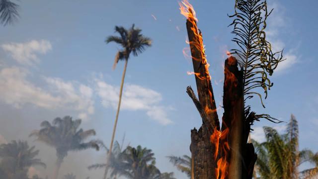 """Brasil vive um """"caos ambiental"""" e """"não vai cumprir"""" o plano"""