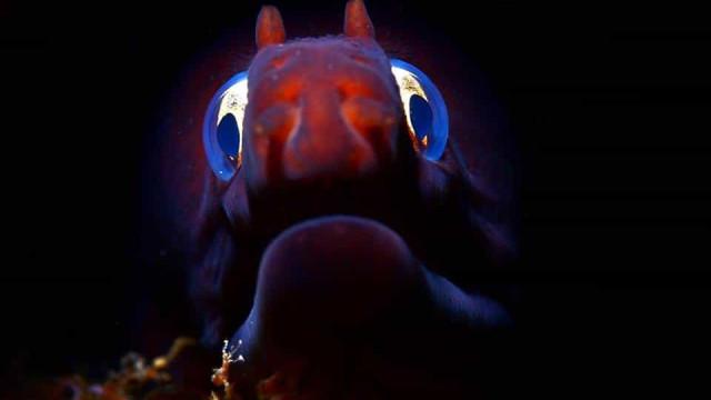 Seleção campeã do mundo em fotografia subaquática na categoria 'Peixe'