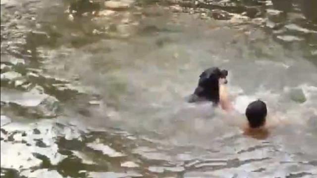 Dono finge que está a afogar-se e cão faz salvamento incrível