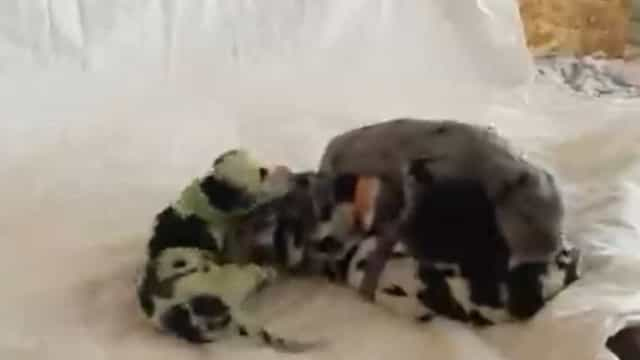 Cadela nasce verde e faz as delícias da dona nos Estados Unidos