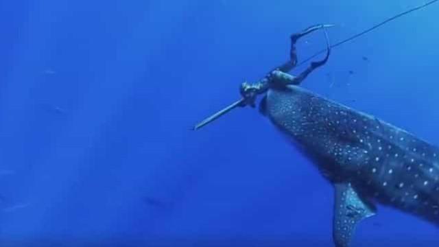 Açoriano tem encontro inesperado com tubarão-baleia e há vídeo do momento