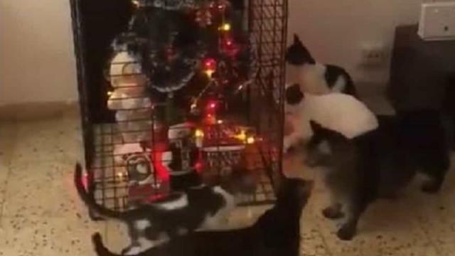 Árvore de Natal no teto? Esqueça! Esta é a forma de a 'salvar' dos gatos