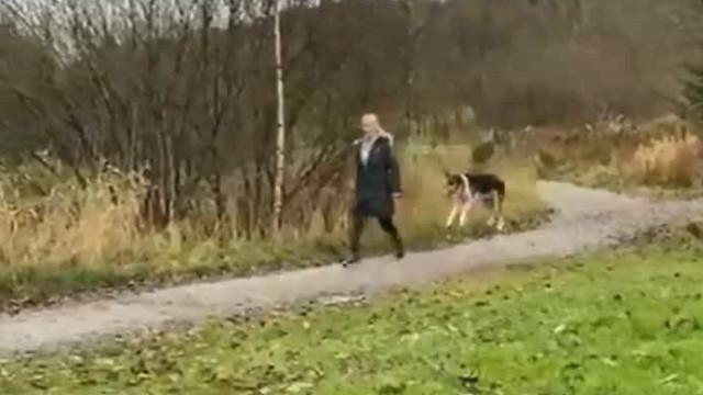 É um cão? Um canguru? É um 'cãoguru'. Video já é viral