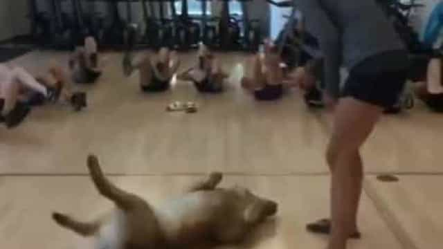 Cão diverte-se em aula de fitness