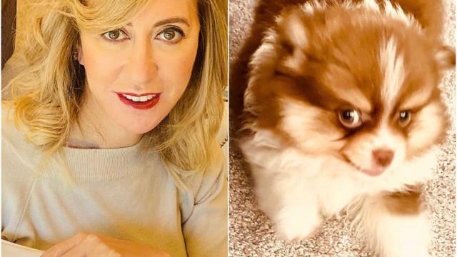 Judite Sousa encanta seguidores com vídeo do seu novo 'cãopanheiro'