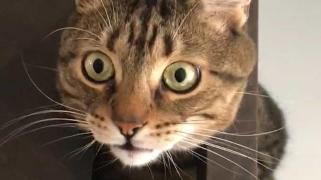 Bélgica regista primeiro contágio de um animal doméstico pelo dono