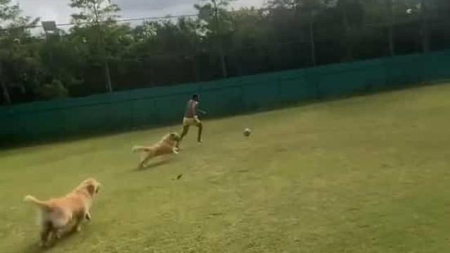 Futebol em suspenso? Neymar decide 'treinar'... com os cães