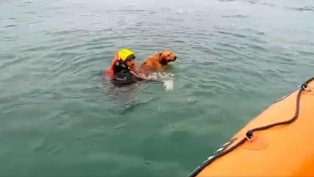 """Cão """"em dificuldades"""" resgatado do rio pela Estação Salva-vidas de Sines"""