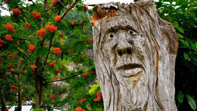 Maneiras criativas de reutilizar uma árvore morta