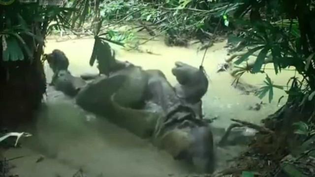 Rinoceronte apanhado a deliciar-se na hora do banho