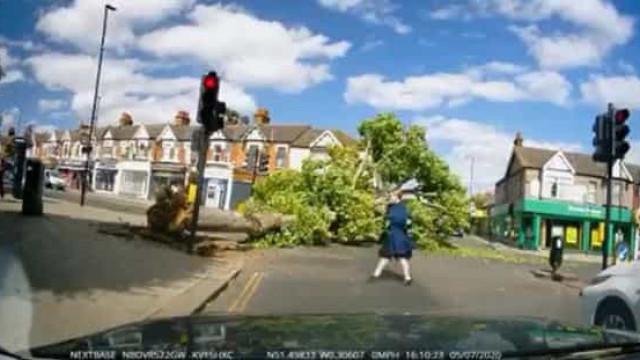 Iam a passar e salvaram-se quase por milagre de queda de árvore