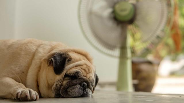 Como cuidar dos seus animais de estimação durante uma onda de calor