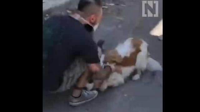 Associação está a reunir animais e donos separados pela explosão