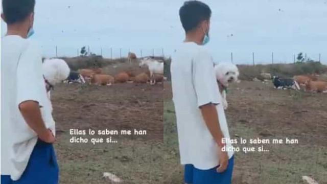Filho de Setién perguntou às vacas se o Barcelona vai ganhar a Champions