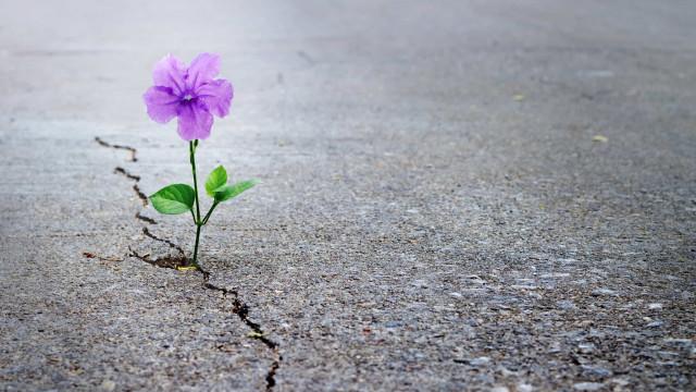 Dez razões para nunca perder a esperança