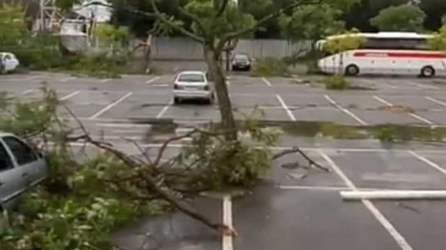Vídeo: Ventos fortes deixam rasto de destruição em Beja